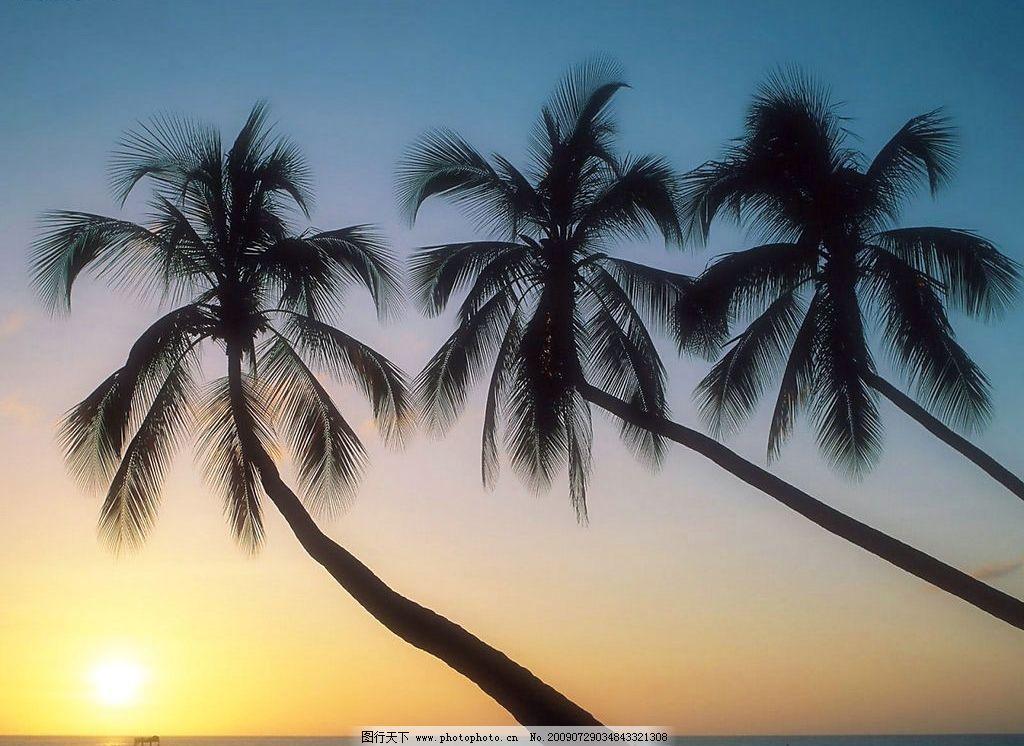 海边风景 美丽风景 日出 海边 海水 蓝天 白云 云层 天空 树木 椰树