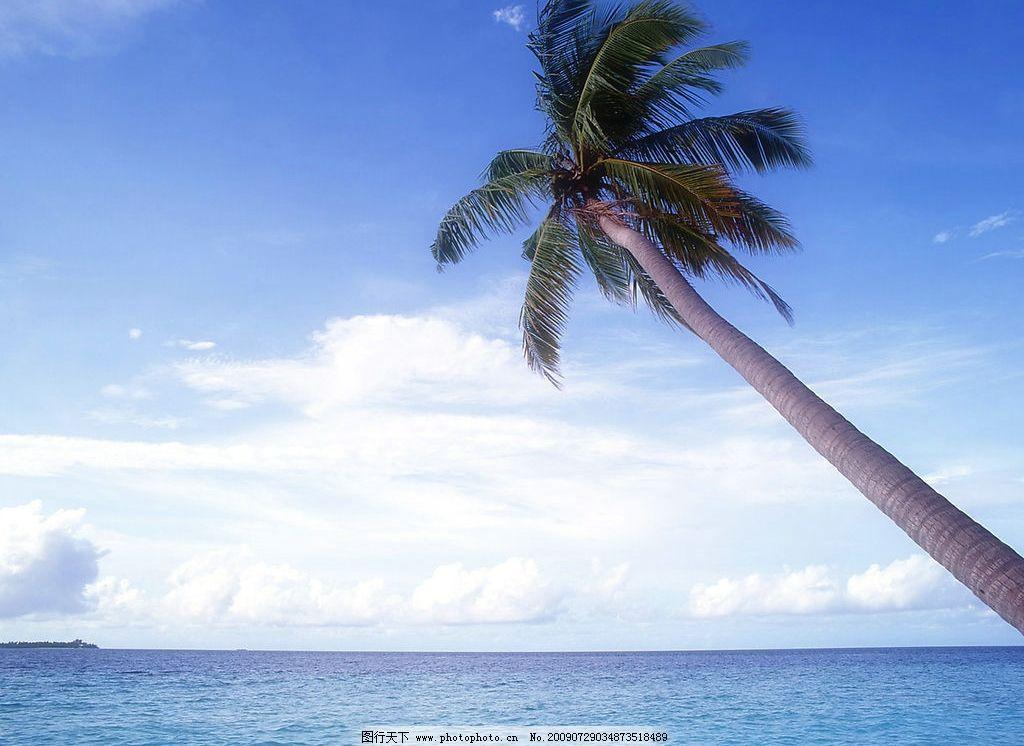 海边风景 美丽风景 海边 海水 蓝天 白云 云层 天空 树木 椰树 自然景
