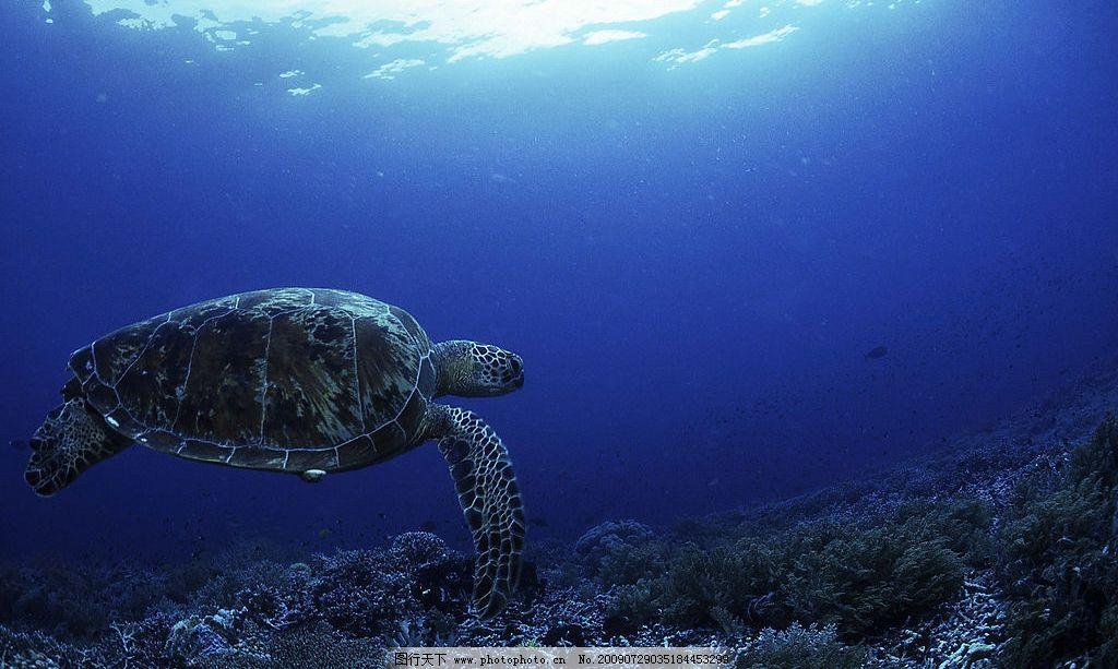海龟 海底世界 大海龟 海洋生物 海里 海底 水世界 海世界 生物世界