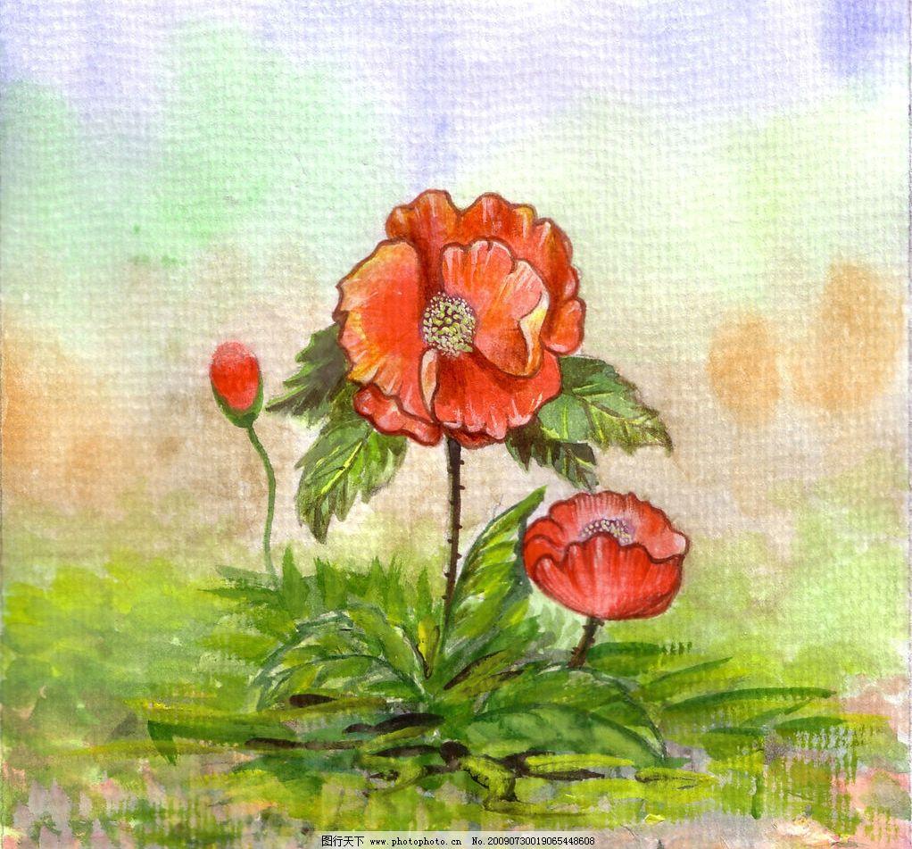 手绘罂粟花图片