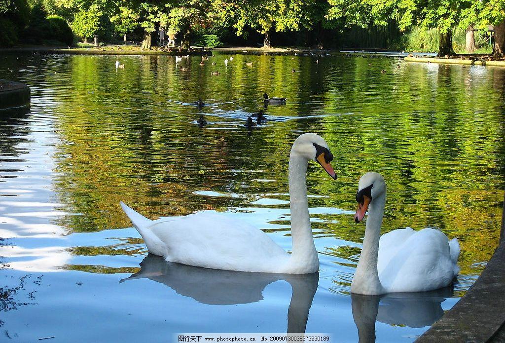 壁纸 动物 风景 鸟 鸟类 摄影 桌面 1024_695