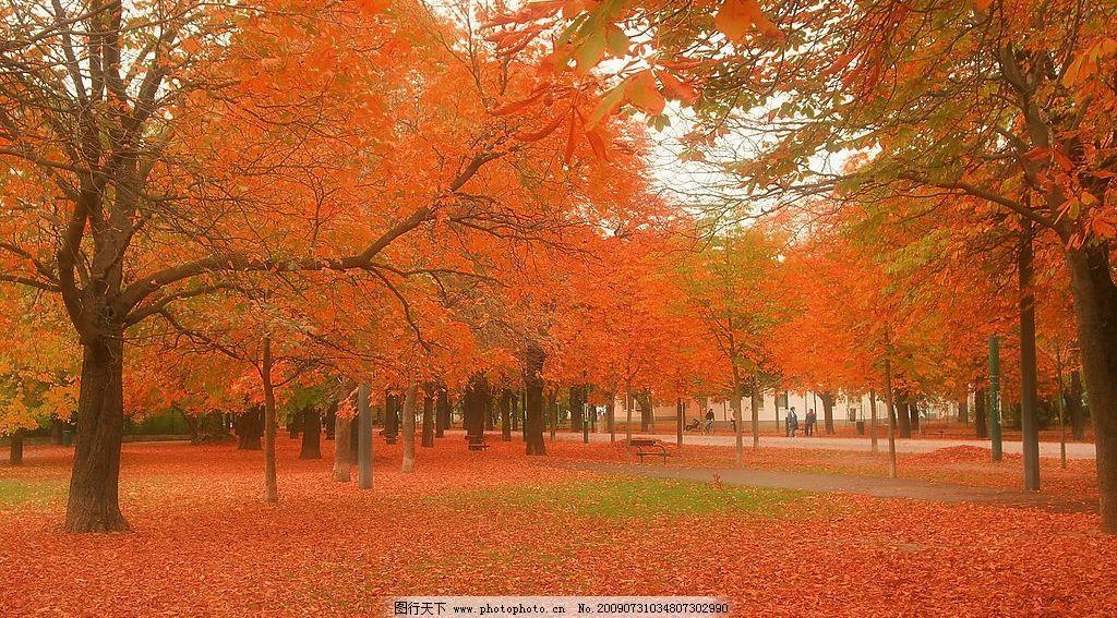 背景 壁纸 枫叶 风景 红枫 绿色 绿叶 森林 树 树叶 植物 桌面 1024