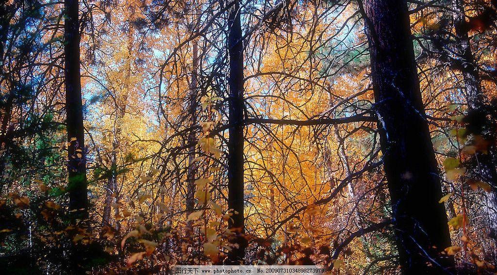 大树林 树林 树木 大树 自然景观 自然风景 摄影图库 300dpi jpg