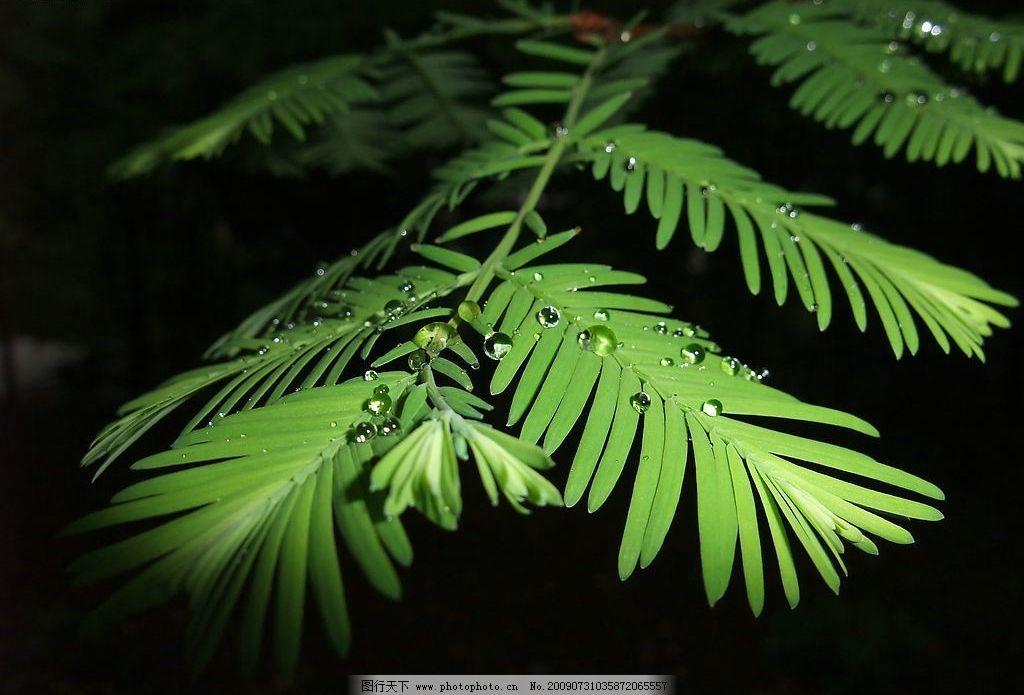 雨后树叶 树叶 水滴 生物世界 树木树叶 摄影图库 jpg