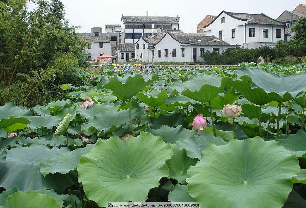 荷塘丽色 花 荷花 荷塘 古建筑 温州生态园 旅游摄影 自然风景 摄影图