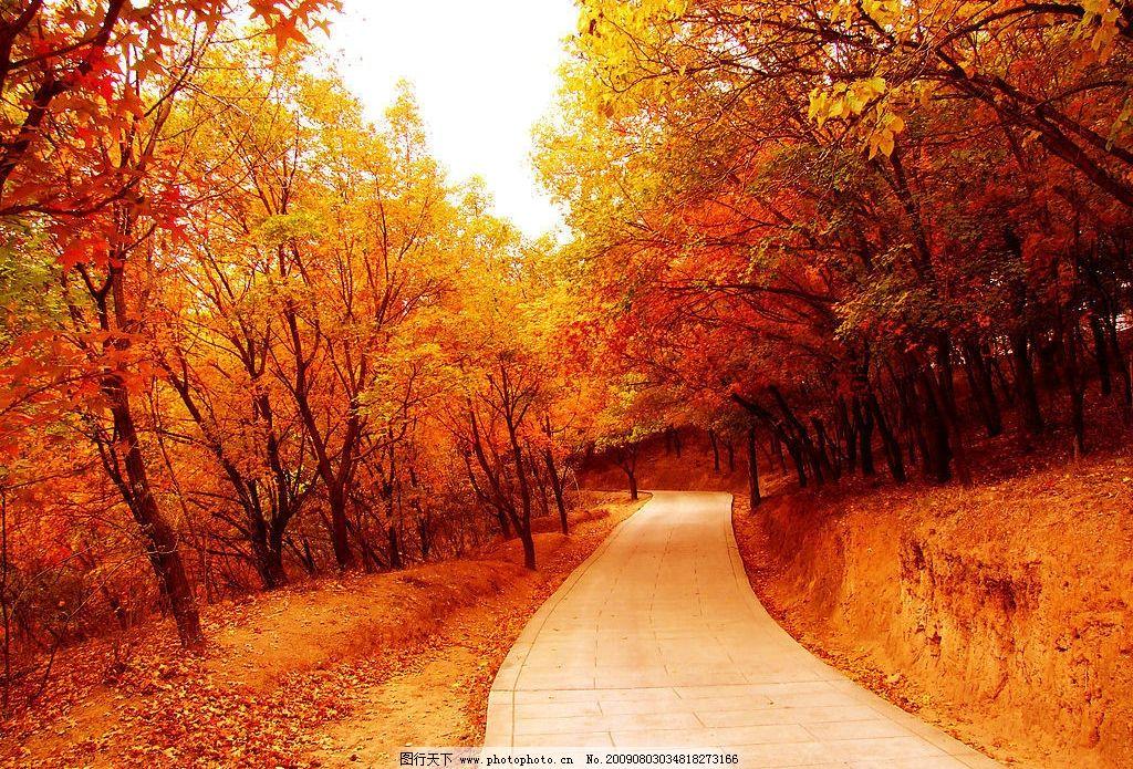 秋天景色 自然景观 自然风景 秋色 秋天 枫叶 枫树 树林 小道 秋景