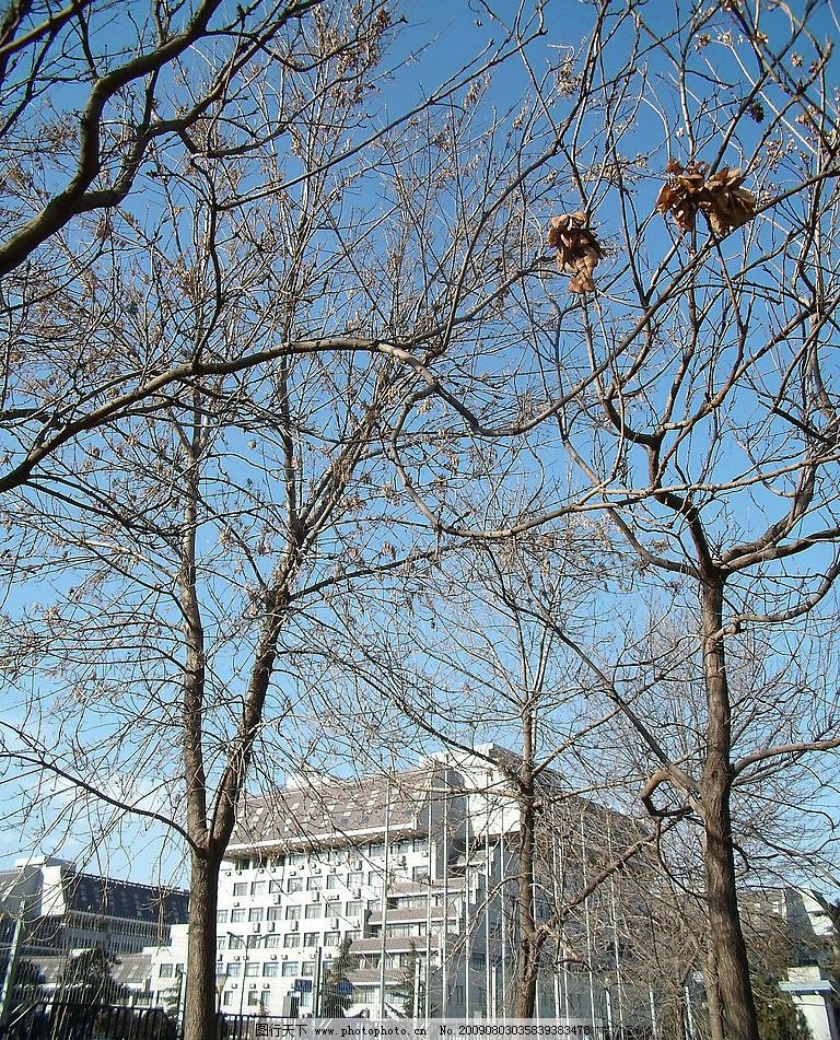 阳光与树木 大自然 景观 景象 生物 植物 天空 云彩 建物 房屋