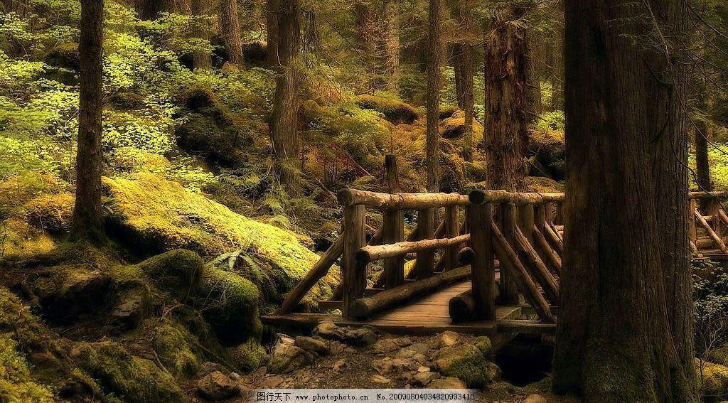 绿野仙踪 森林 木桥 自然景观 自然风景 摄影图库