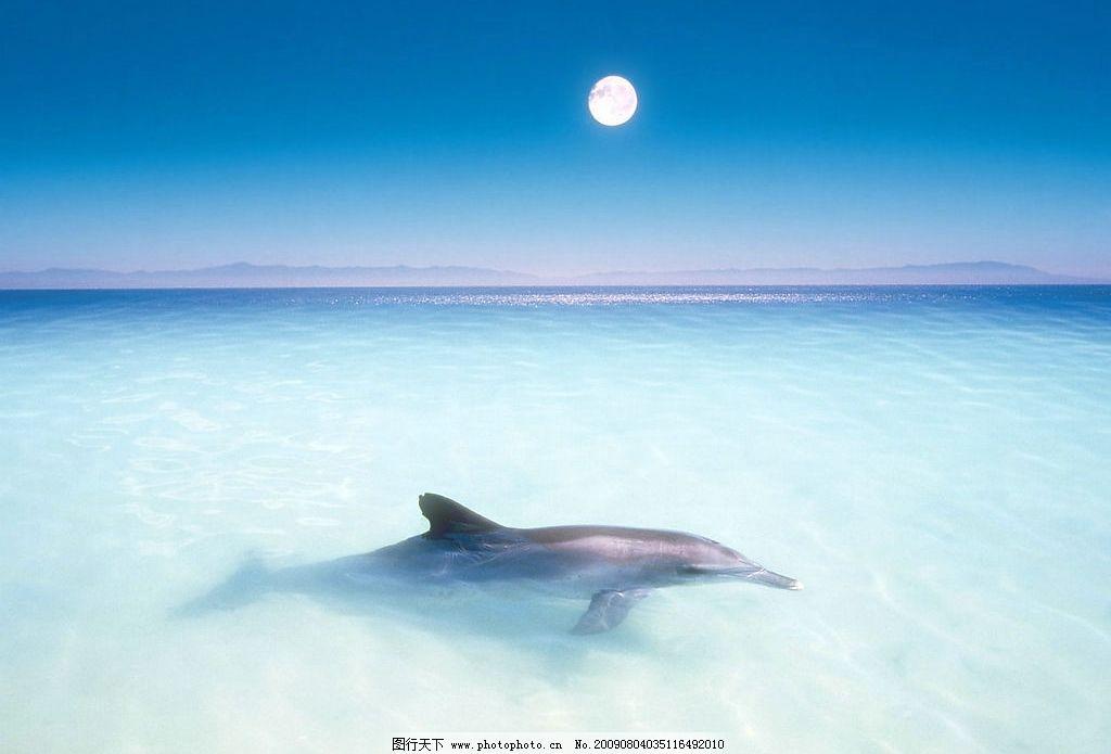 水中鲸鱼 鲸鱼 海水 海底 水 海洋 生物世界 海洋生物 摄影图库 68dpi