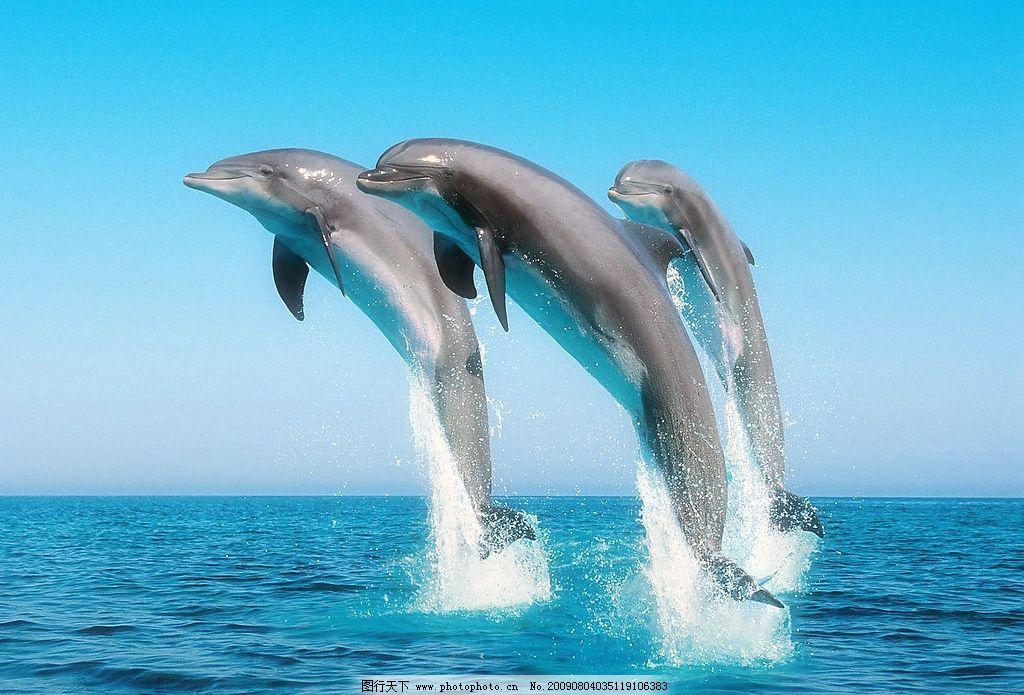 壁纸 动物 海洋动物 鲸鱼 桌面 1024_695