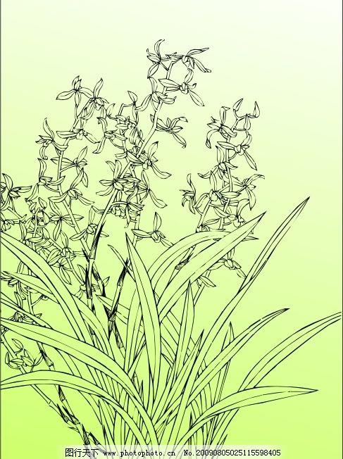 兰花 兰花白描图 其他矢量 矢量素材 矢量图库 cdr 生物世界 花草