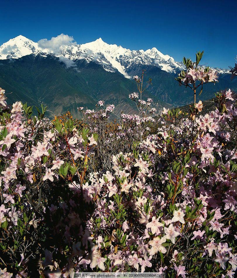 风景 雪山 天空 云朵 山峰 野花 植物 旅游摄影 国内旅游 摄影图库