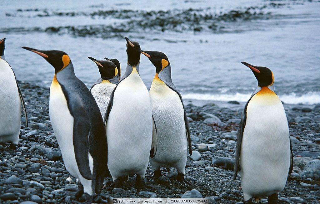壁纸 动物 企鹅 1024_654