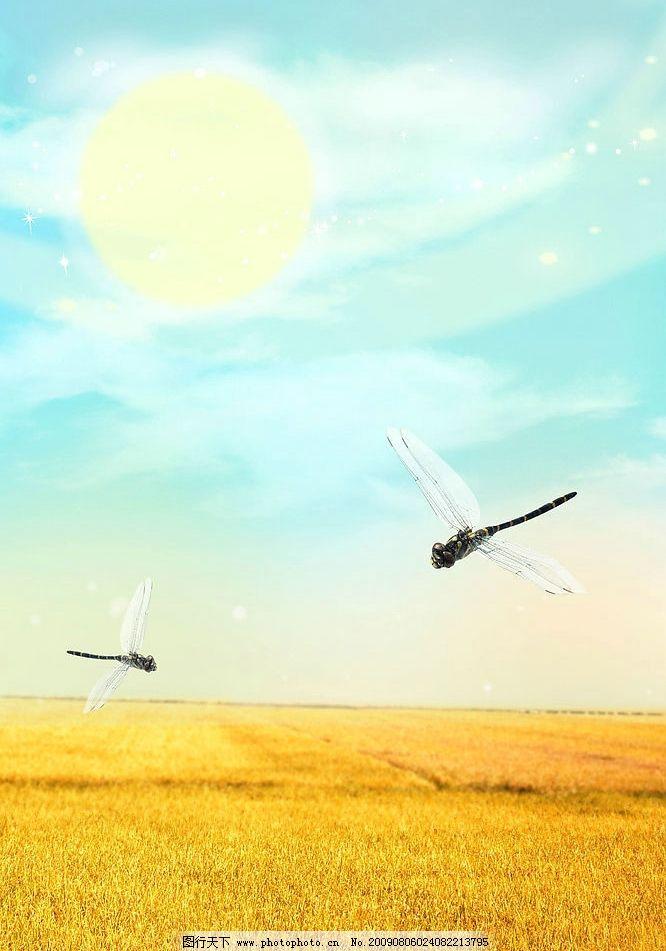 秋天 稻田 稻谷 熟了 蜻蜓 太阳 阳光 光芒 蓝天 白云 自然景观 自然