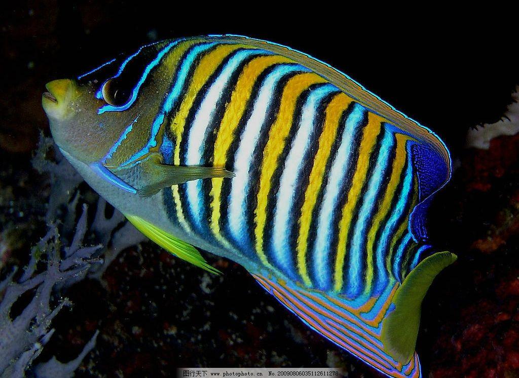 壁纸 动物 鱼 鱼类 1024_746
