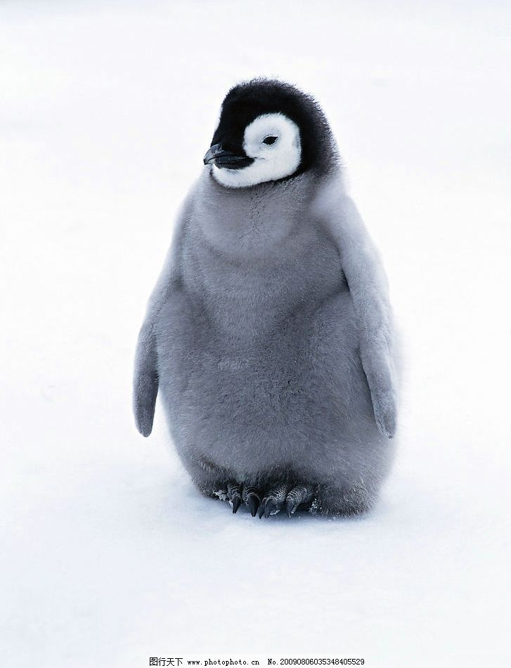 ps企鹅画法步骤
