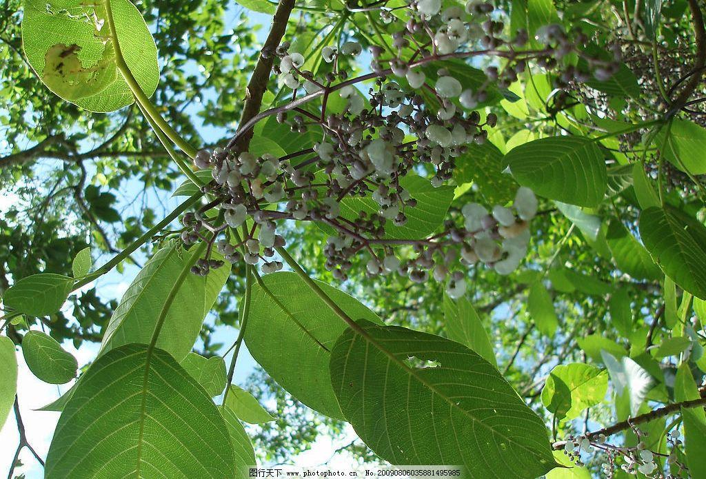 景象 生物 植物 花草 花卉 树木 树叶 果实 生物世界 树木树叶 摄影