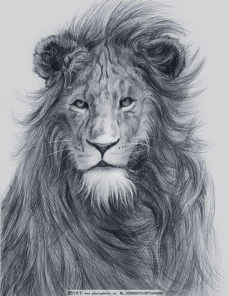 素描狮子图片