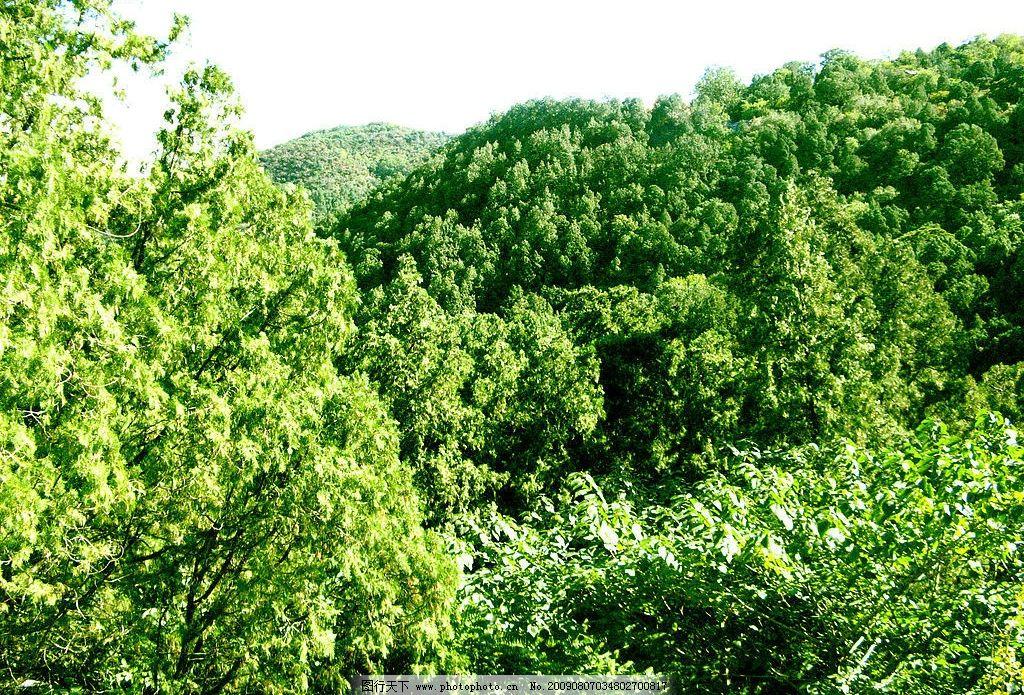 树木图片_自然风景_自然景观_图行天下图库