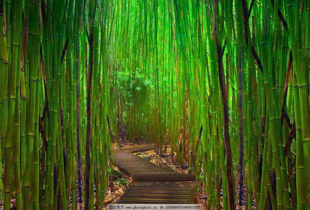 绿色壁纸 小径 竹林 小路 自然景观 自然风景 摄影图库 72dpi jpg