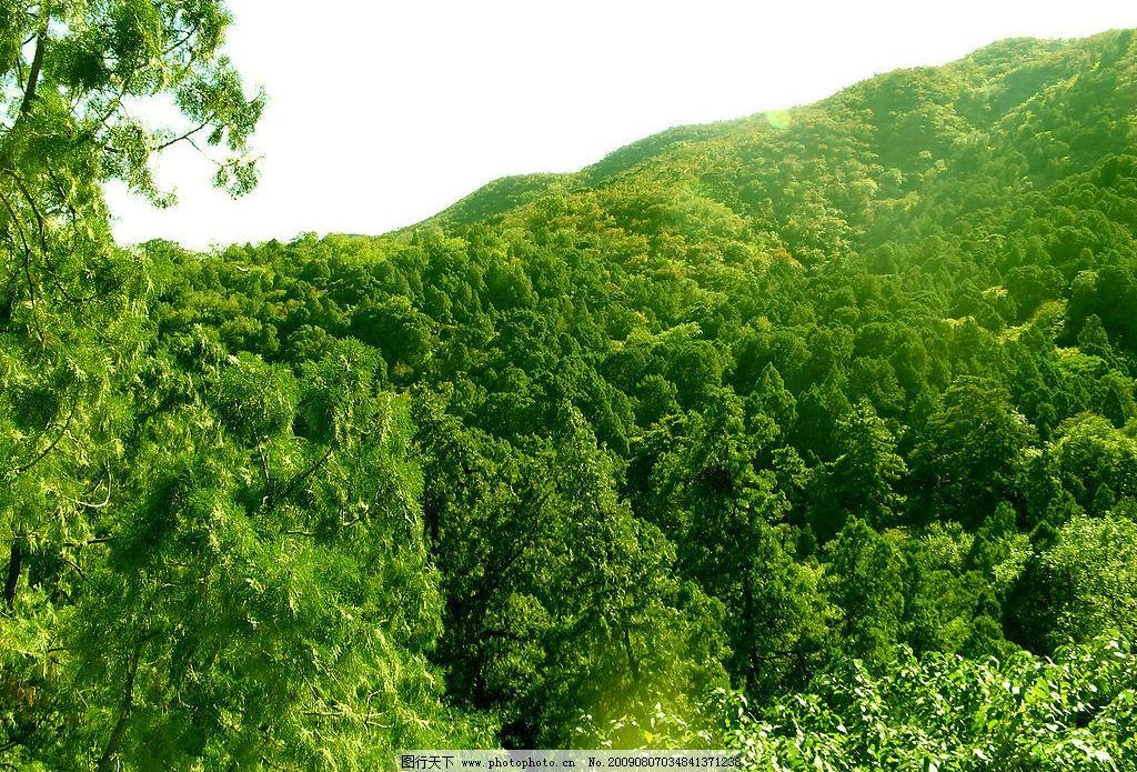 树木 树林 森林 大树 绿树 树叶 林子 香山 北京西山 山 大山 山峰