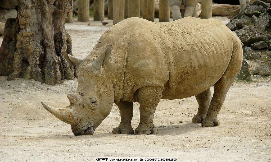 犀牛 双角犀牛 清晰 生物世界 野生动物 摄影图库 72dpi jpg