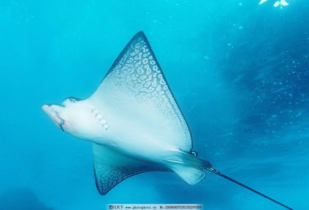 海洋鱼类 海底世界 游泳