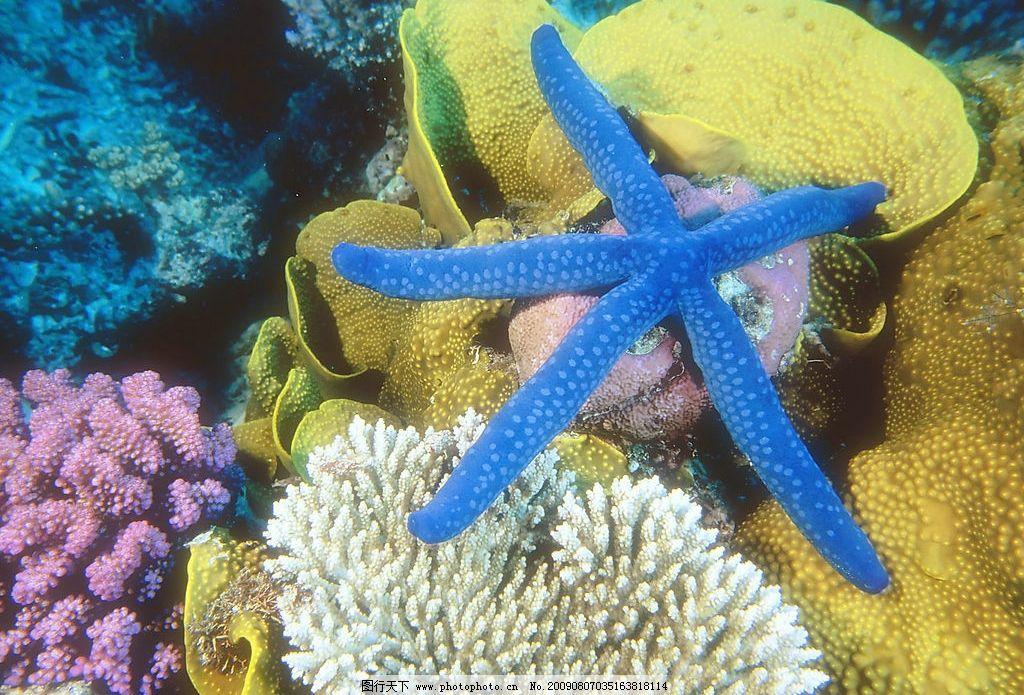 海星 海洋生物 珊蝴礁石 海底世界 海洋 珊蝴 礁石 生物世界 摄影图库