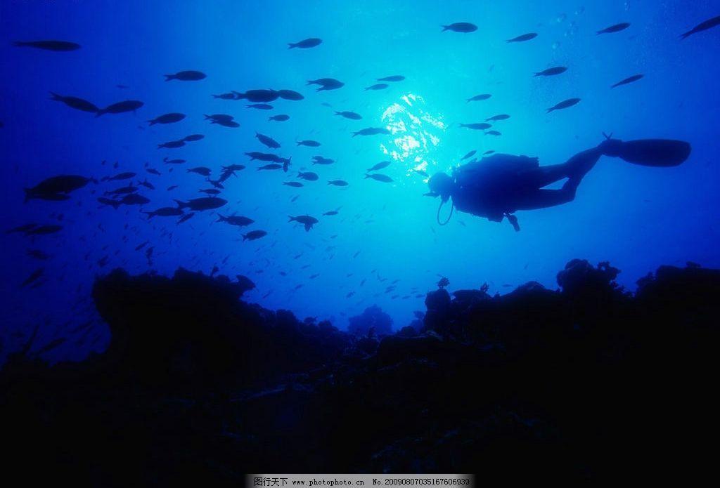 海底世界 珊蝴礁石 海洋 海洋生物 珊蝴 礁石 鱼类 鱼 生物世界 摄影