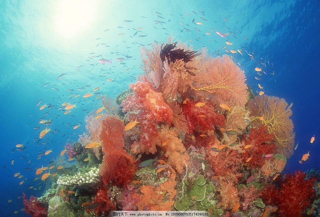 海洋生物 珊蝴礁石 海底世界 海洋 珊蝴 礁石 鱼类 鱼 生物世界 摄影