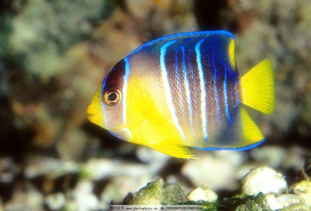海洋鱼类 珊蝴礁石 海底世界 摄影图库