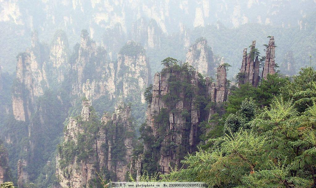 张家界风景 薄雾 山峰 山谷 松树 植物 岩石 自然风景 摄影图库