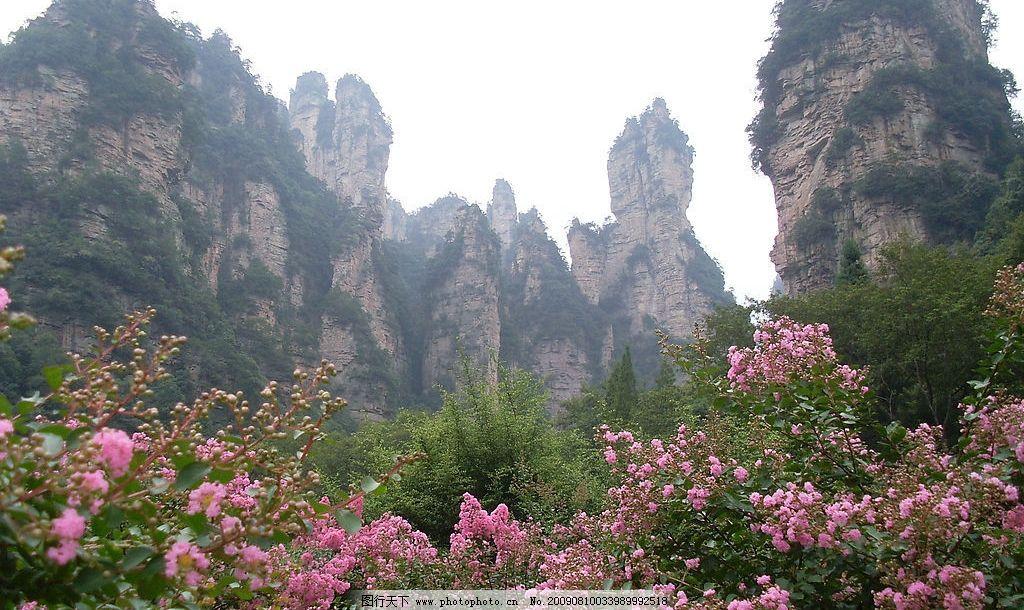 张家界风景 蓝天 山峰 岩石 松树 植物 鲜花 自然景观 自然风景