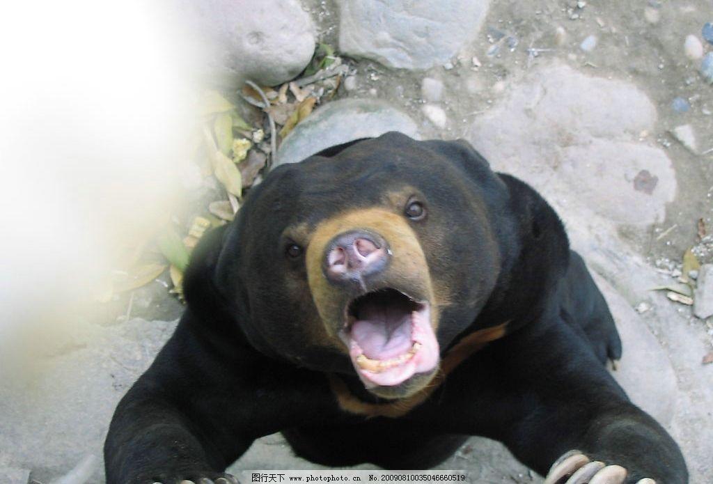 动物园之熊图片