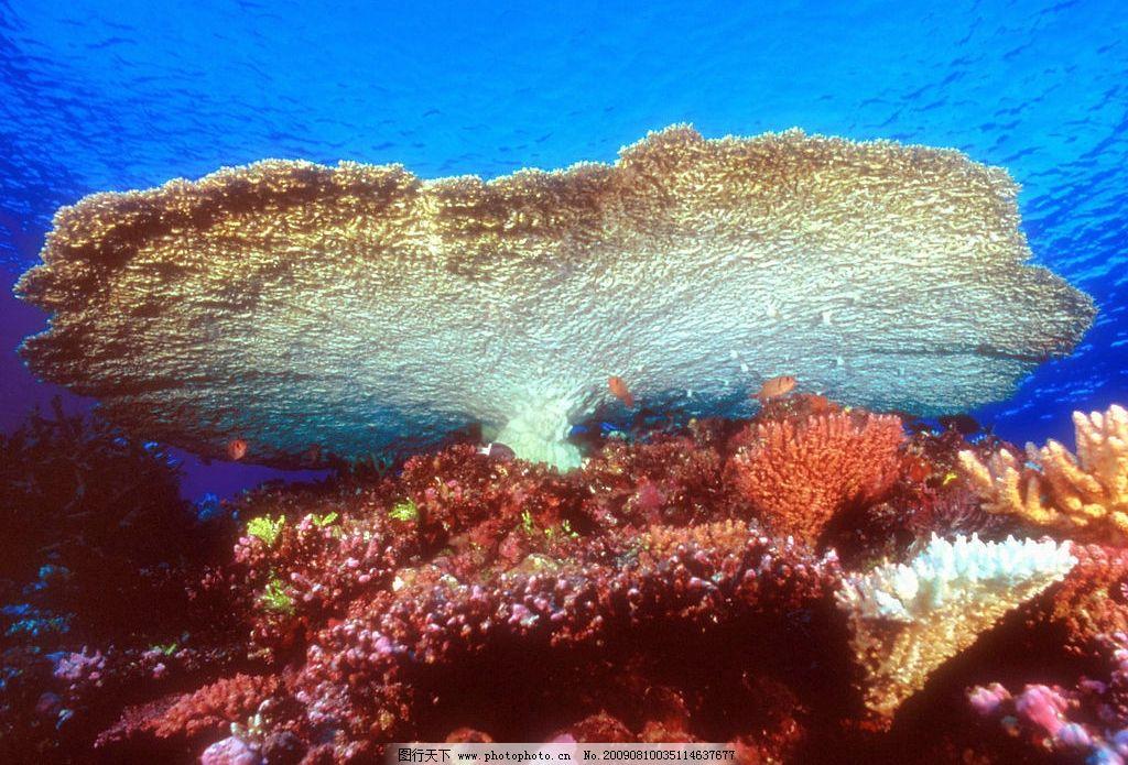海底珊蝴 珊蝴礁石 海底游泳 海底世界 海洋 海洋生物 珊蝴 礁石 生物