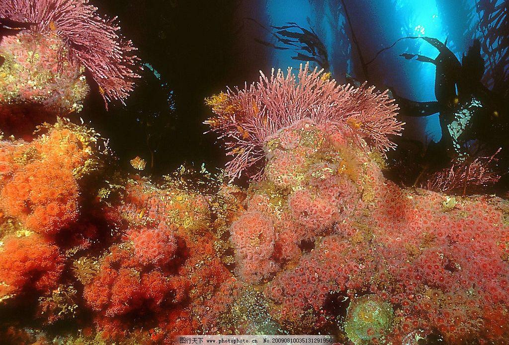 海底世界 珊蝴礁石 海底游泳 海洋 海洋生物 珊蝴 礁石 鱼类 鱼 生物