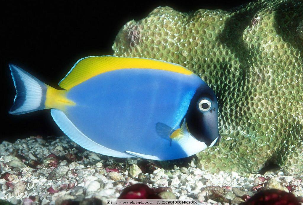 海洋鱼类 珊蝴礁石 海底世界 海洋 海洋生物 珊蝴 礁石 鱼类 鱼 生物