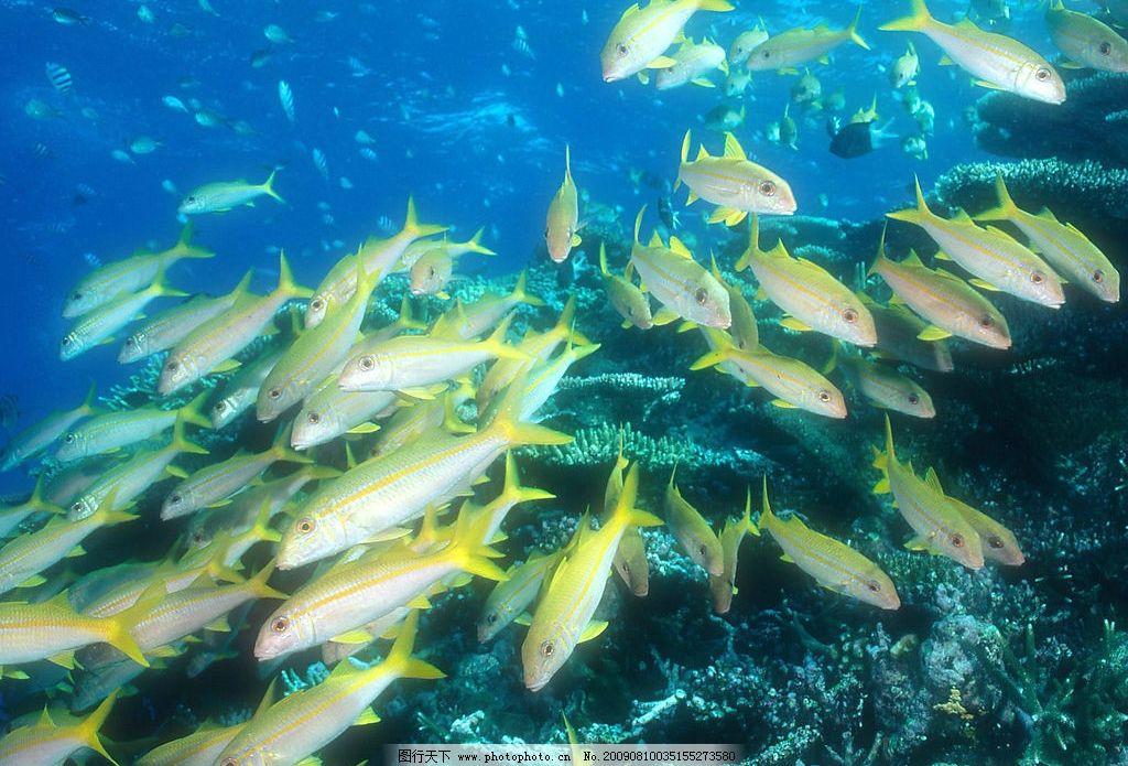 海洋鱼群 海底世界 海洋 海洋生物 鱼类 鱼 生物世界 摄影图库 72dpi