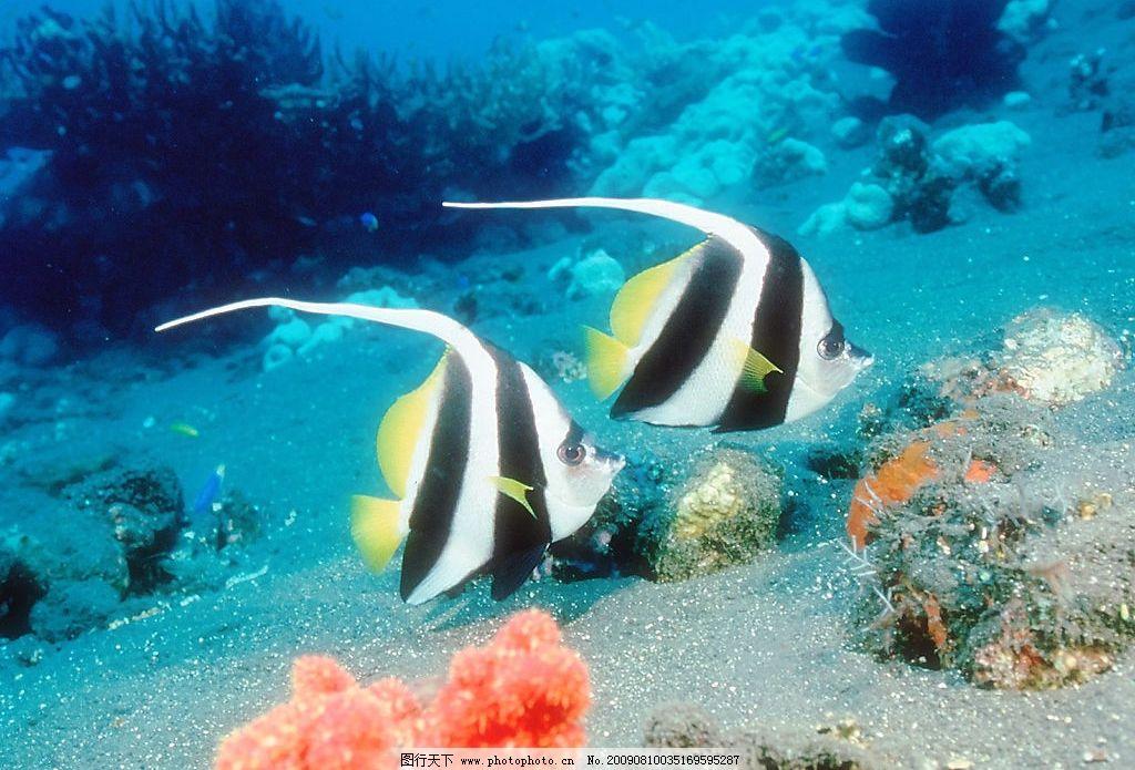 海底鱼类 珊蝴礁石 海底世界 海洋 海洋生物 珊蝴 礁石 鱼类 鱼 生物