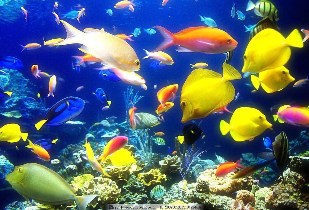海洋鱼群 珊蝴礁石 海底世界 海洋 海洋生物 珊蝴 礁石 鱼类 鱼 生物