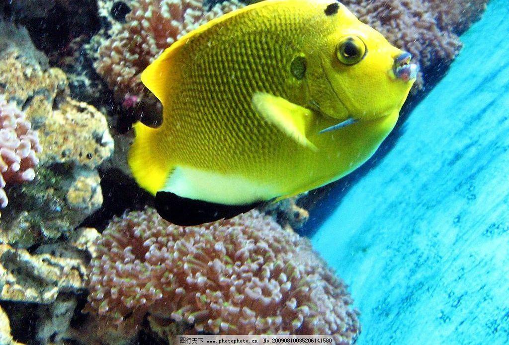 观赏鱼价格及图片大全【相关词_观赏鱼图片大全,观赏鱼的种类太平洋