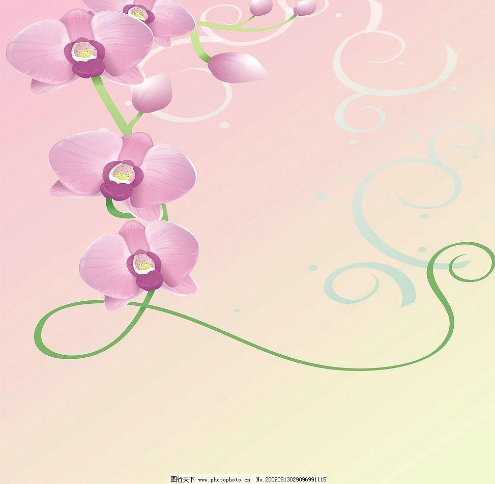 蝴蝶兰 玻璃移门图案 兰花 线条 底纹边框 花边花纹 设计图库 72dpi