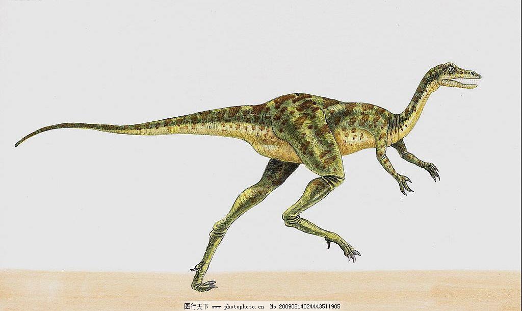恐龙40 恐龙 高清恐龙 史前巨兽 凶猛动物 巨兽 生物世界 野生动物