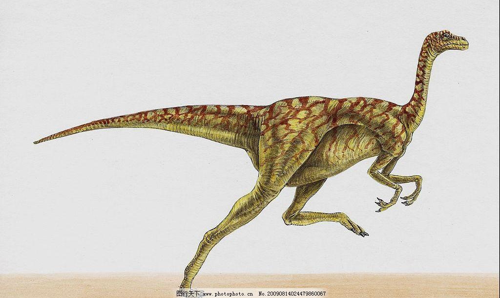 恐龙36 恐龙 高清恐龙 史前巨兽 凶猛动物 巨兽 生物世界 野生动物