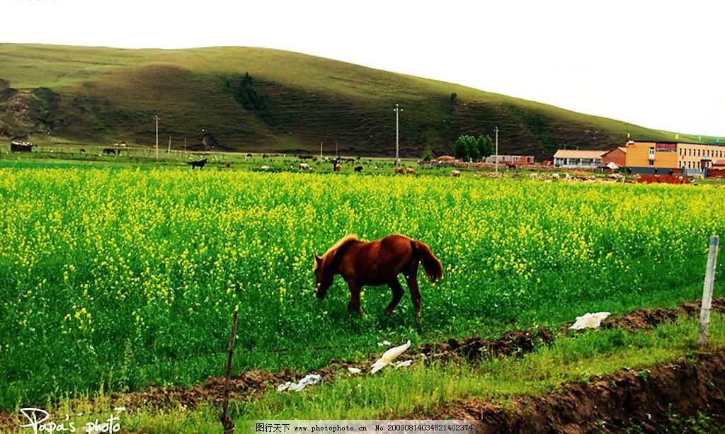 风景 动物 马 草地 白云 蓝天 摄影 山 自然景观 自然风景