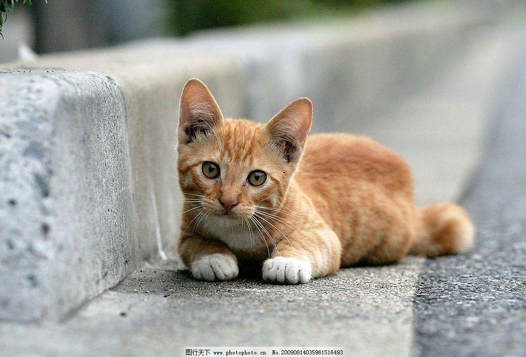 可爱的小猫咪图片_家禽家畜