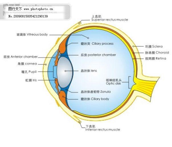 眼球结构图矢量素材