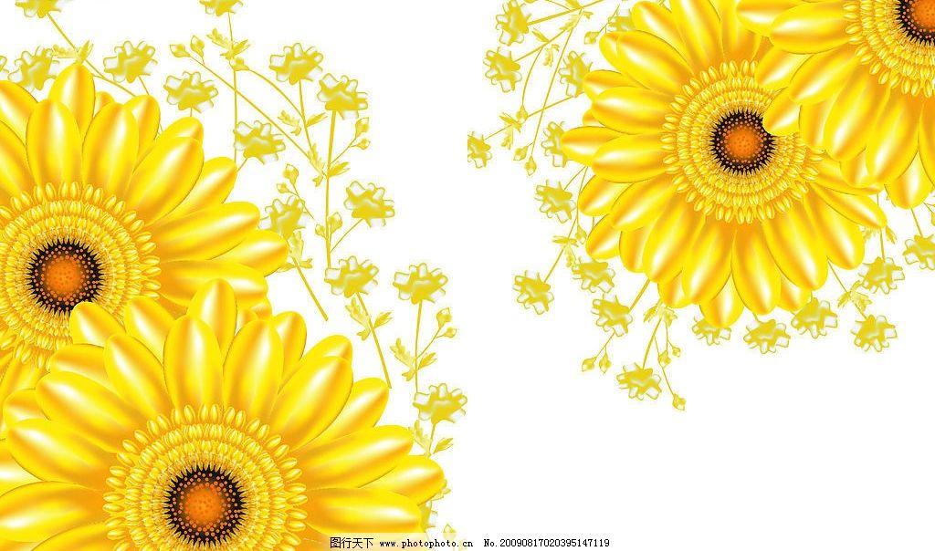 太阳花移门 太阳花 黄色 金色 葵花 移门 底纹边框 花边花纹 设计图库