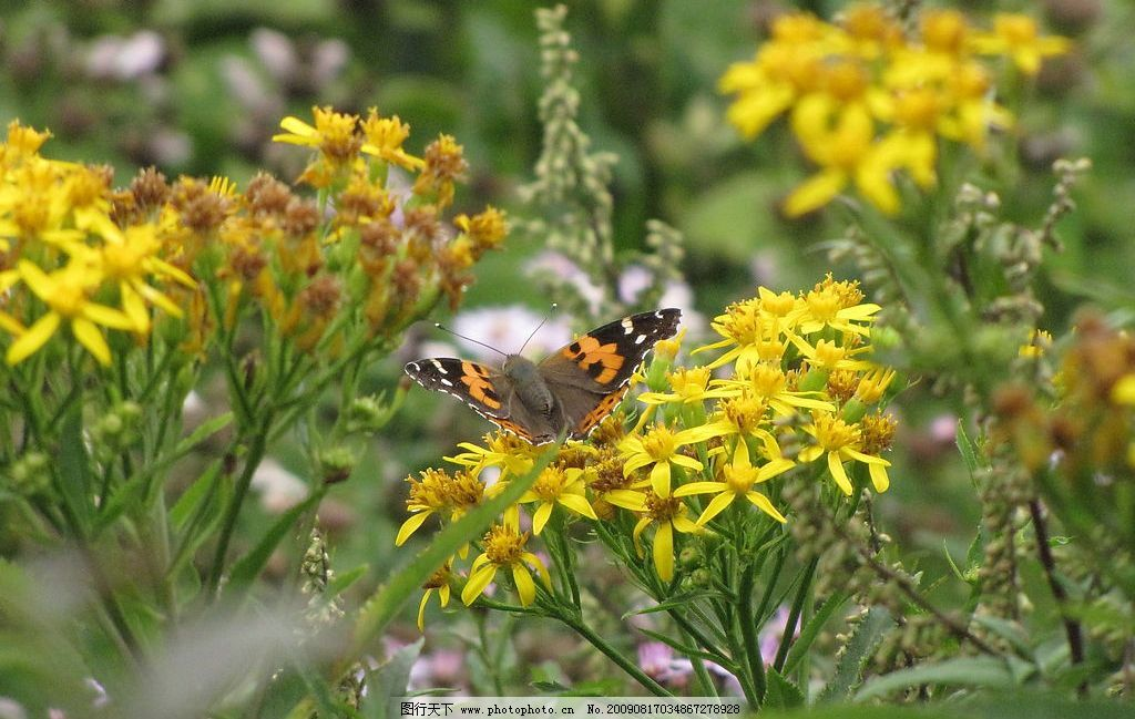 泰山花浪漫 泰山 旅游 摄影 大自然 山花 昆虫 小动物 自然景观 自然