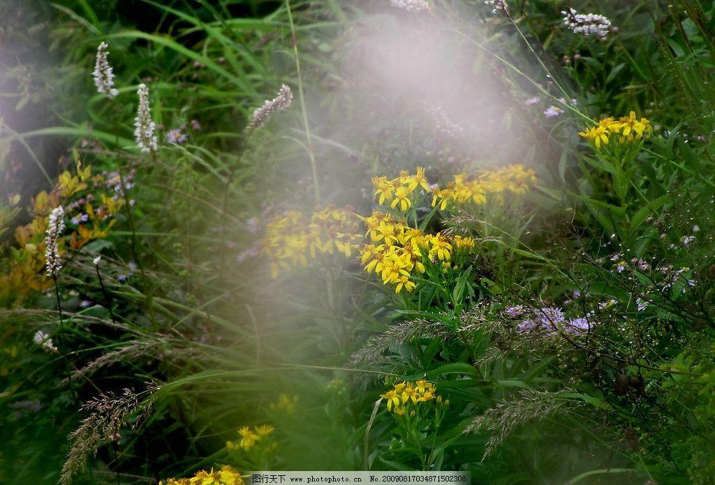 旅游 摄影 泰山 大自然 山花 昆虫 小动物 自然景观 自然风景 摄影
